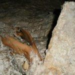 In der Wengenhöhle wurden zwei rund 3000 Jahre alte Braunbärenskelette gefunden.
